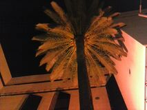 Palm tree in courtyard at night