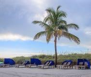 Palm tree on Crescent Beach in Sarasota. Palm tree and beach chairs at Crescent beach - Siesta Key Sarasota Florida Stock Photos