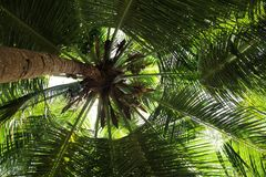 Palm tree crown dark firmament. A snapshot in the summer at Seychelles Stock Photo