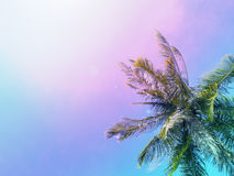 Palm tree crown on sky background. Palm leaves over blue sky. Pink and blue toned photo. Royalty Free Stock Images