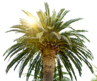 Palm Tree Crown and Sun on Bright Sky Background Stock Photography