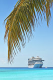 Palm Tree With Cruise Ship in Background Royalty Free Stock Image