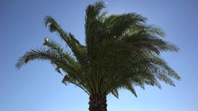 Palm tree dancing in wind breeze, bright sun shinning on blue serene sky, holiday invitation