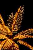 Palm tree decorative with electric illumination Royalty Free Stock Photos
