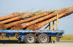 Palm tree delivery Royalty Free Stock Image