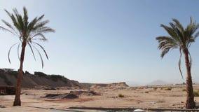 Palm tree in desert stock footage