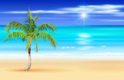 Palm tree on the deserted tropical beach Royalty Free Stock Image