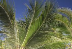 Palm tree detail Royalty Free Stock Photos