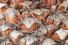 Palm tree detail Stock Photos