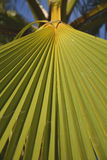 Palm tree detail. Palm trees in the evening Royalty Free Stock Image