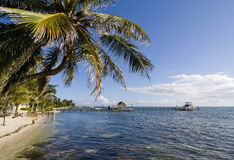 Palm tree in Caye Caulker, Belize. Palm tree and dock in clear blue tropical water in Caye Caulker, Belize Stock Image