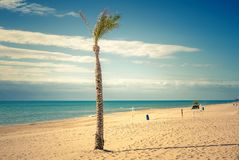 Palm tree  and dozer on Guardamar del Segura Beach. Spain. Palm tree  and dozer  sifting through sand   on Guardamar del Segura Beach.Alicante. Spain stock photo