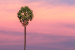 Palm tree on dramatic sunset background Stock Photo