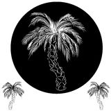 Palm Tree Drawing Stock Photo