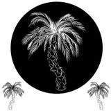Palm Tree Drawing Stock Photo
