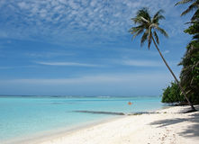 Palm tree on dream beach Stock Photography