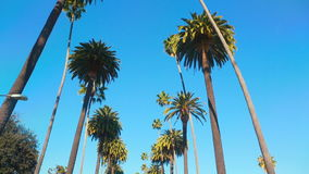 Palm Tree Drive stock video