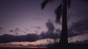 Palm tree at dusk stock video footage