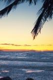 Palm tree at dusk Stock Photo