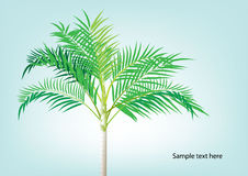 Palm tree ,Dwarf Date, Pigmy Date vector illustration  Stock Photography