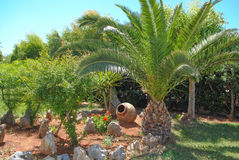 Palm tree and earthenware jar Stock Images