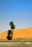 Palm tree on the edge of Sahara desert Royalty Free Stock Photos