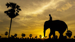 Palm tree with elephant on sunset Stock Photography