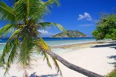 Palm tree on empty beach Royalty Free Stock Photography