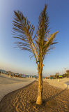 Palm tree on an empty beach Stock Photography