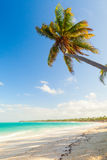 Palm tree on empty sandy beach. Coast of Atlantic ocean Royalty Free Stock Photo