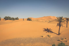 Palm tree in Erg Chebbi, at the western edge of the Sahara Deser Royalty Free Stock Image