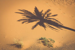 Palm tree in Erg Chebbi, at the western edge of the Sahara Deser Royalty Free Stock Photography