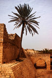Palm tree on exotic ancient  remains. Lone palm tree on ancient ruins on sunny day Stock Photography