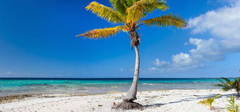 Palm tree on exotic beach. Panoramic photo of a palm tree on exotic beach Royalty Free Stock Photo