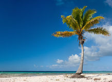 Palm tree on exotic beach Stock Photos
