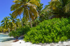 Palm Tree on Exotic Beach at Tropical Island Royalty Free Stock Image