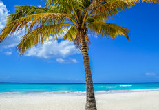 Palm Tree on Exotic Beach at Tropical Island Stock Photos