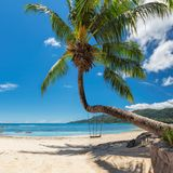 Palm tree on famous Beau Vallon beach in Seychelles, Mahe island. Famous Beau Vallon beach with palm trees and a white sailing yacht in the turquoise sea on Royalty Free Stock Image