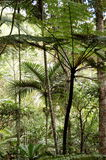 Palm tree and fern forest royalty free stock image