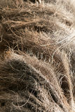 Palm tree fibers. Royalty Free Stock Photography