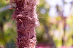 Palm tree fibers Royalty Free Stock Photography