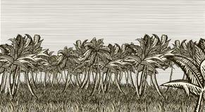 Palm tree field Royalty Free Stock Photos