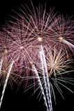 Palm tree fireworks Stock Photos
