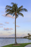 Palm tree in Florida. A palm tree at sunset in Florida with copy space Royalty Free Stock Photo