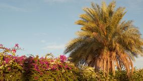 Palm tree and flowering bushes against the sky stock video footage