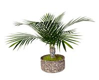 Palm Tree in a Flowerpot Royalty Free Stock Photos