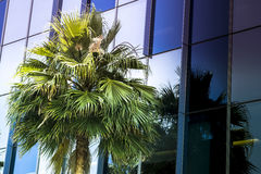Palm tree in foreground of office Royalty Free Stock Photography