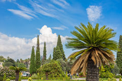 Palm tree in foreground. With other trees in the background near Lisbon royalty free stock image