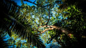 Palm tree in forest royalty free stock photos