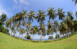 Palm tree forest in Bali, Indonesia Stock Images